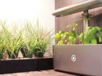 Tecnologia que permite criar sua própria horta doméstica sem saber cultivar