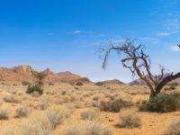 O deserto em nós
