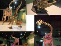 Museu da Ciência e Vida recebe exposição que mistura dinossauro e robótica!
