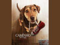 A Caminho de Casa: uma aventura canina emocionante