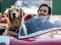 Meu amigo Enzo: Mais um filme esquecível de cachorro?