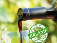 Vinhos Orgânicos : Produção em crescimento