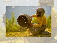 Honeyland: A arte de produzir mel