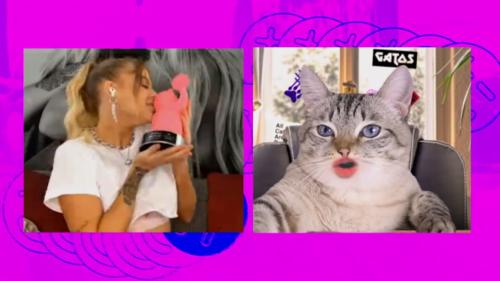 MIAW Cat Show recebe Luísa Sonza - Foto: Divulgação