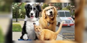 Como Cães e Gatos 3 – Peludos Unidos: Uma nova sequência que surgiu do nada