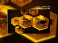 PLANETA INSETO – 10 anos: Conheça sete curiosidades encontradas no único zoológico de insetos do Brasil