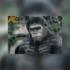 Especial Planeta dos Macacos: Star Life exibe maratona da clássica série de filmes