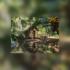 DIA DA AMAZÔNIA : Jardim Botânico do Rio promove semana de atividades sobre o bioma Amazônia a partir deste domingo (5)